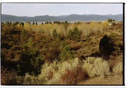 Fall colors outside of Klamath Falls