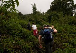 Hiking through the jungles to the gorillas