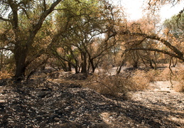 wildfire site