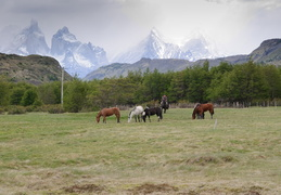 gaucho, horses & mountains